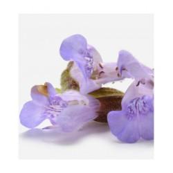 ENERSALplus