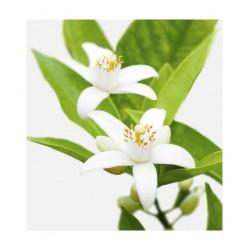 LINEAfast